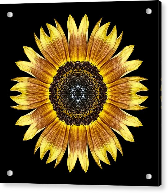 Yellow And Brown Sunflower Flower Mandala Acrylic Print