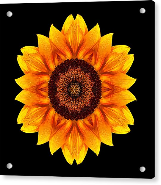 Yellow And Orange Sunflower Vi Flower Mandala Acrylic Print