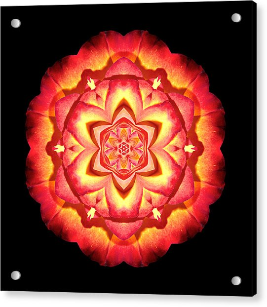 Yellow And Red Rose II Flower Mandalaflower Mandala Acrylic Print