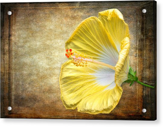 Acrylic Print featuring the photograph Yellow Hibiscus by Garvin Hunter