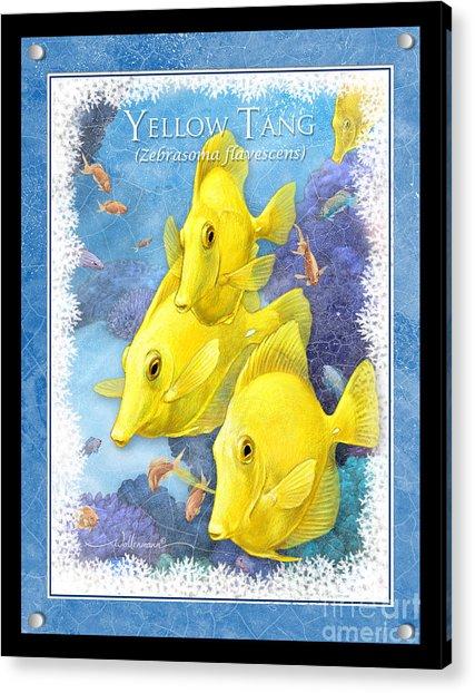 Yellow Tang Acrylic Print