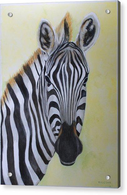 Yipes Stripes Acrylic Print