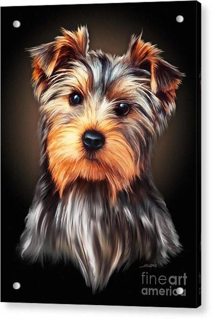 Yorkie Portrait By Spano Acrylic Print