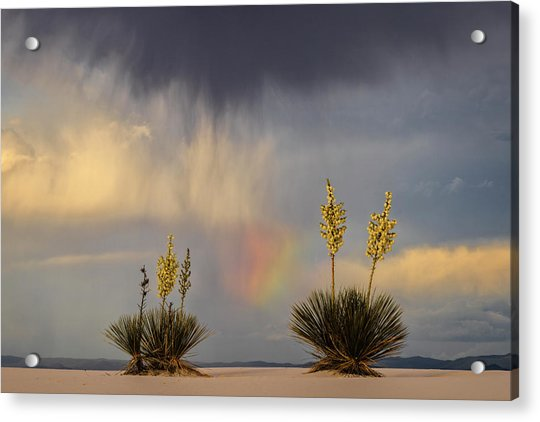 Yuccas, Rainbow And Virga Acrylic Print by Don Smith