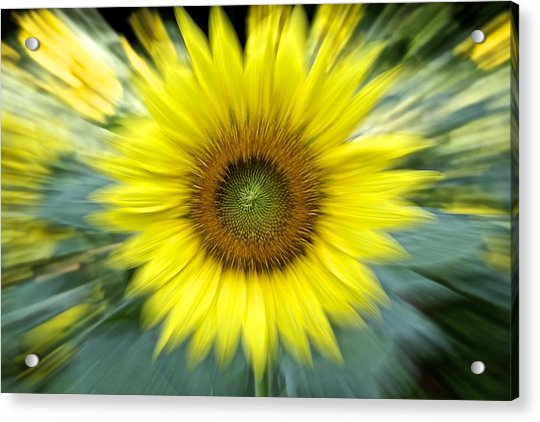 Zoom Sunflower Acrylic Print