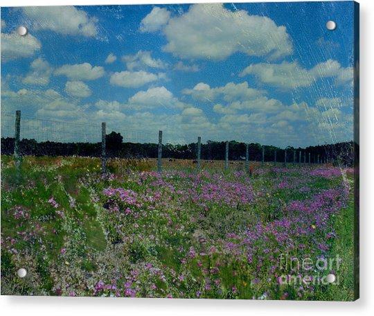 Archer Flax Acrylic Print