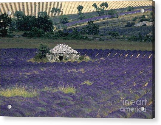 Field Of Lavender. Sault Acrylic Print