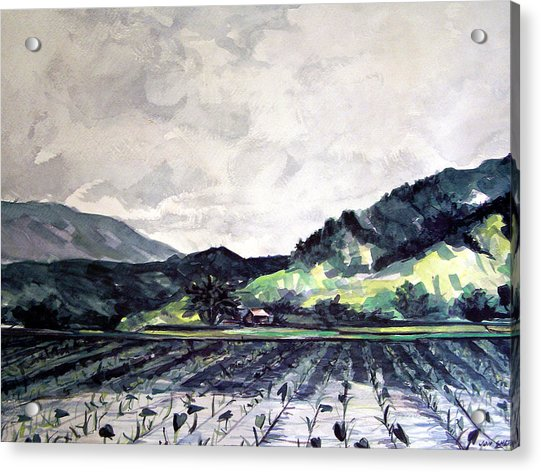 Hanalei Valley Acrylic Print by Jon Shepodd