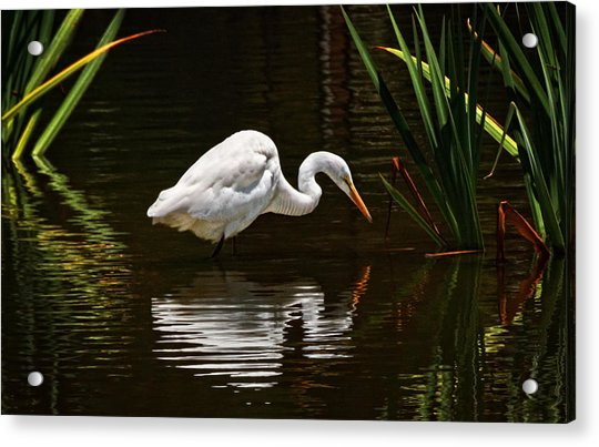 Ripples On The Pond  Acrylic Print by Donna Pagakis