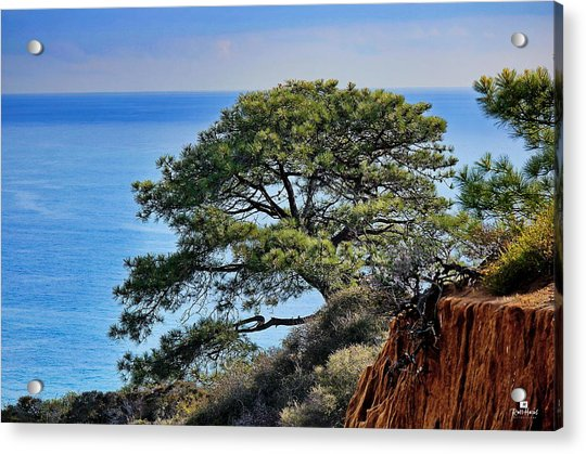 Torrey Pines Acrylic Print
