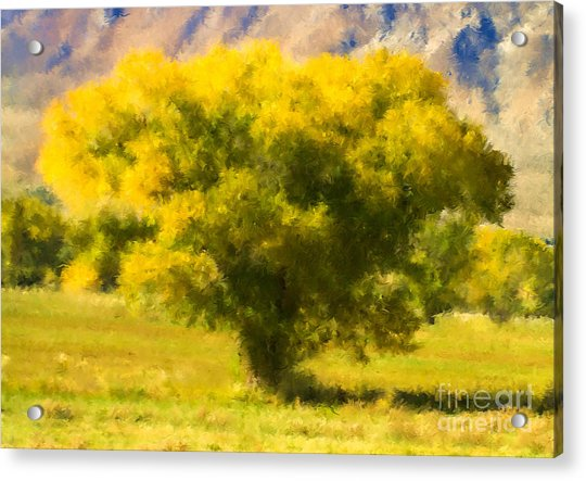 Autumn Cottonwood Acrylic Print