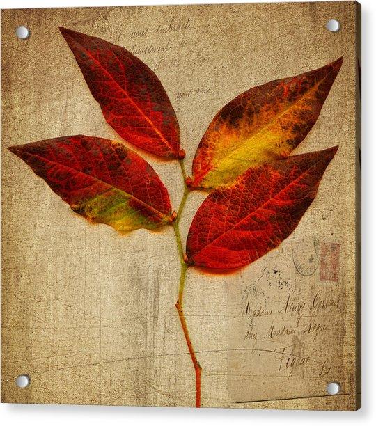 Autumn Leaf With Texture Acrylic Print