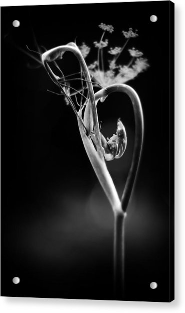 B Is For Bronze Fennel Acrylic Print