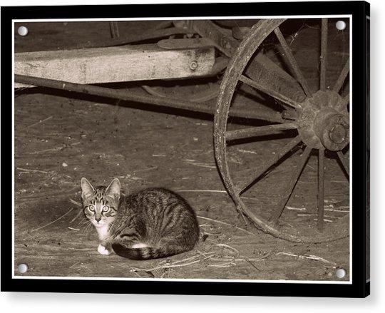 Barn Cat II Acrylic Print