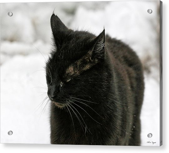 Black Cat White Snow Acrylic Print
