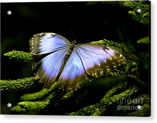 Bright Blue  Acrylic Print