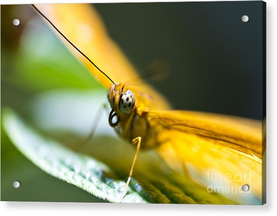 Bug Out Acrylic Print