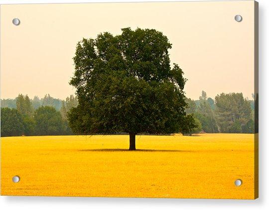 California Oak Acrylic Print