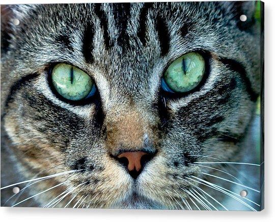 Cat Face Acrylic Print