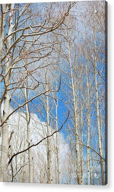 Cloudy Aspen Sky Acrylic Print