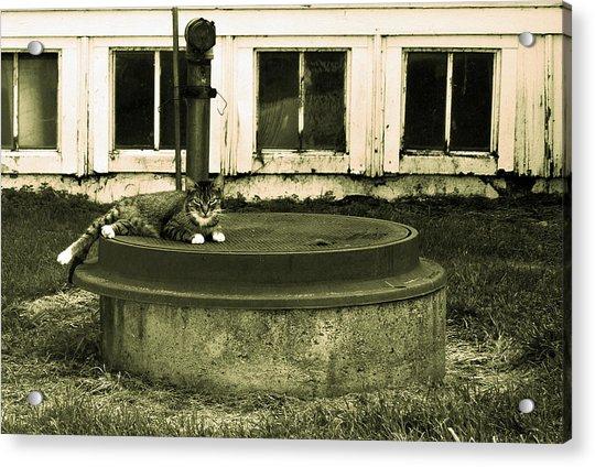 Country Cat Acrylic Print