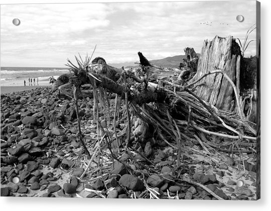 Driftwood And Rocks Acrylic Print