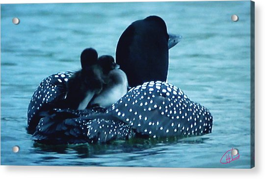 Acrylic Print featuring the photograph Duck Family Joy In The Lake  by Colette V Hera  Guggenheim