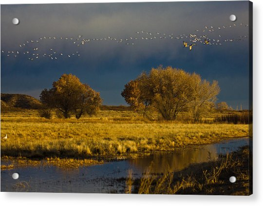 Early Morning Take Off Acrylic Print