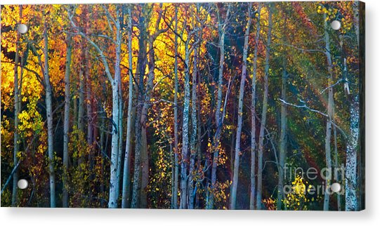 Enchanted Aspen Acrylic Print