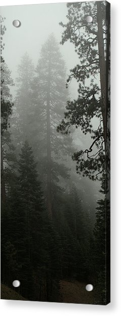 Enchanted Forest Cropped Acrylic Print