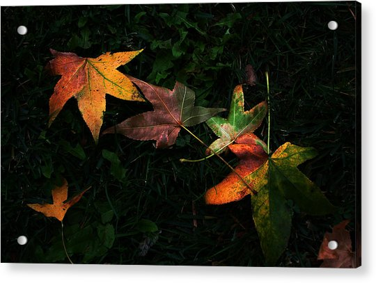 Fall Leaves On Grass Acrylic Print