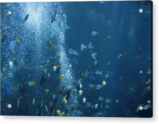 Acrylic Print featuring the photograph Fish Menagerie by Cynthia Marcopulos