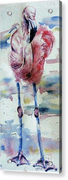 Flamingo Mist Acrylic Print by Norma Gafford