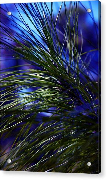 Florida Grass Acrylic Print