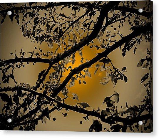 Golden Crabapple Acrylic Print