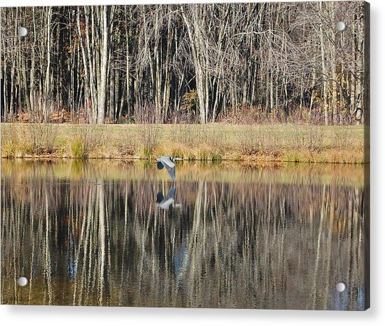 Great Blue Heron In November Acrylic Print