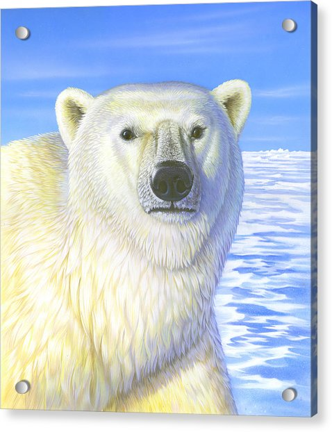 Great Ice Bear Acrylic Print