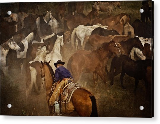 Holding Herd Acrylic Print