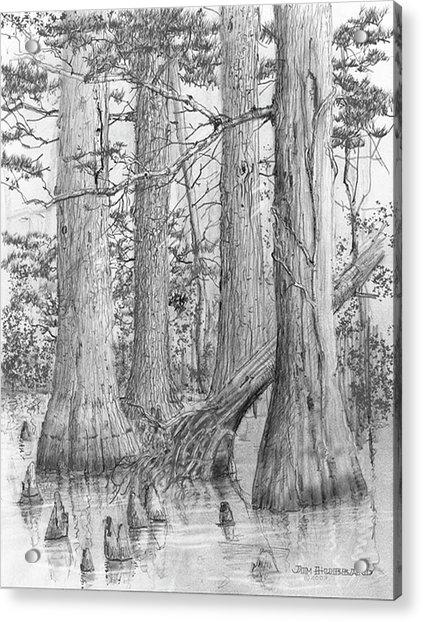 Bald cypress coloring pages ~ Louisiana-bald Cypress Drawing by Jim Hubbard