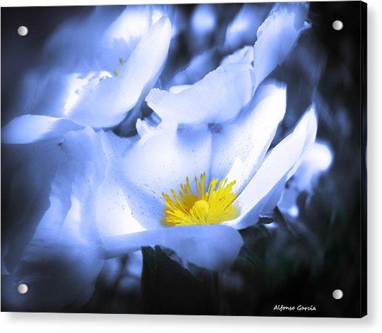 Mirando A La Luz Acrylic Print