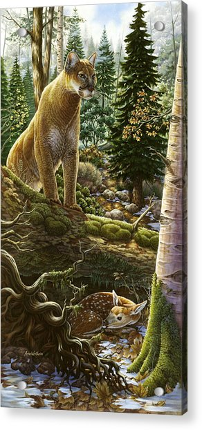 Mountain Lion With Fawn Acrylic Print