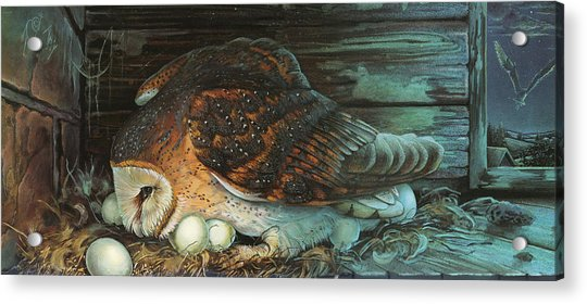 Nesting Owl Acrylic Print