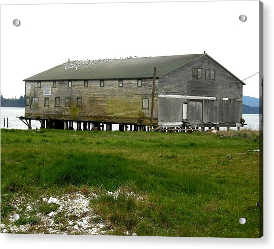 Old Cannery Oysterville Acrylic Print