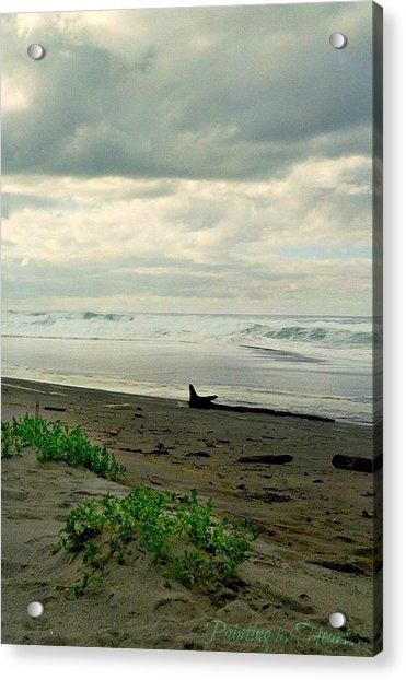 Oregon Coast 17 Acrylic Print