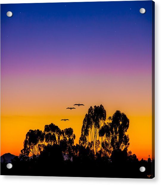 Acrylic Print featuring the photograph Osibisa Dawn by Chris Lord
