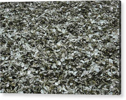 Oyster Piles In Oysterville Acrylic Print