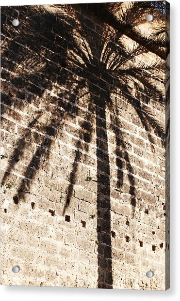 Palm Shadow Acrylic Print