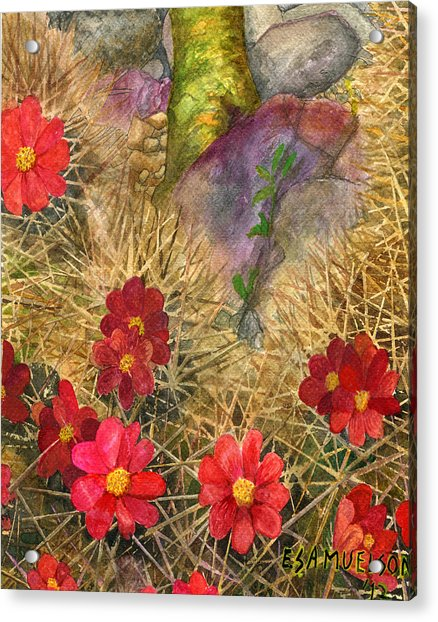 Palo Verde 'mong The Hedgehogs Acrylic Print