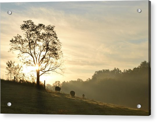 Pasture Sunrise Acrylic Print