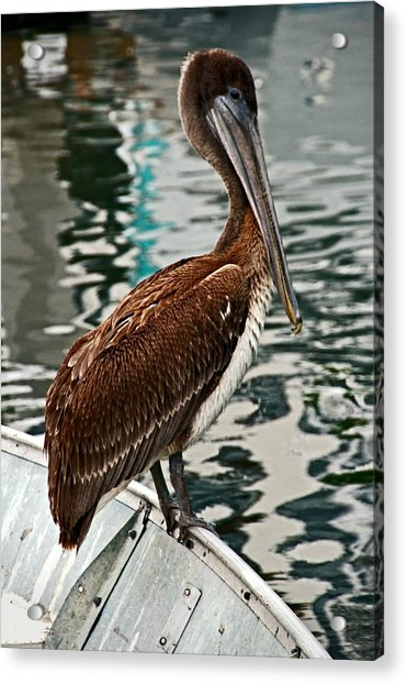 Peaceful Pelican Place Acrylic Print by Donna Pagakis